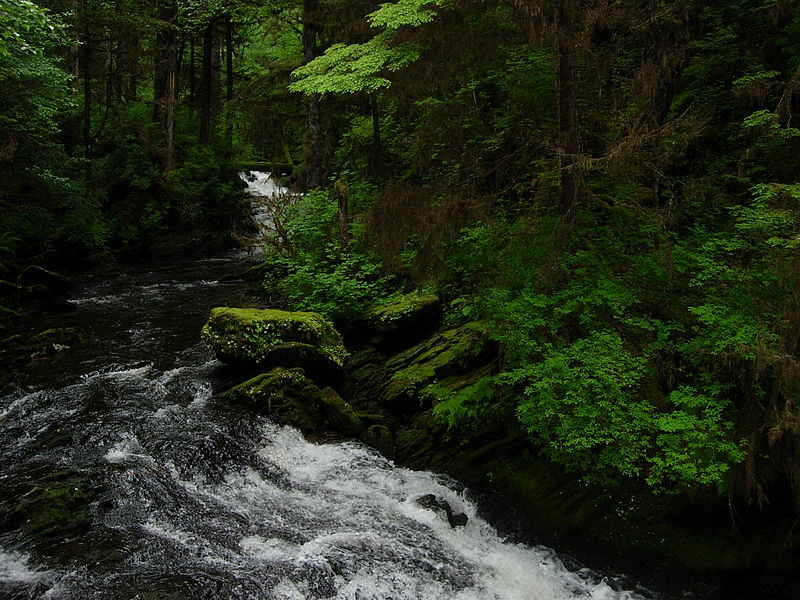 4. Tongass National Forest