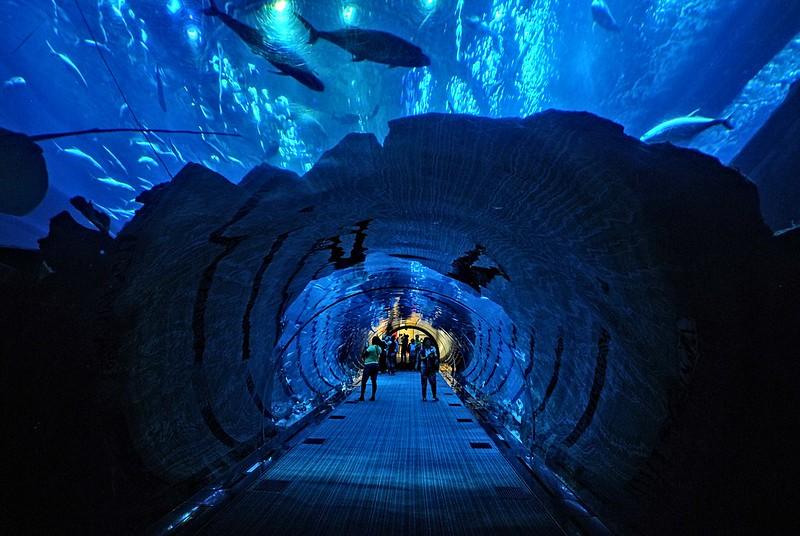 5. Dubai Mall Aquarium