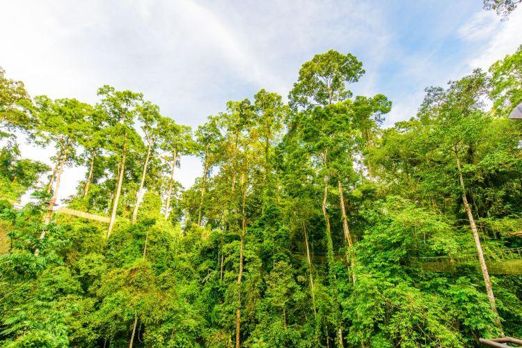 5. Xishuangbanna Tropical Rainforest