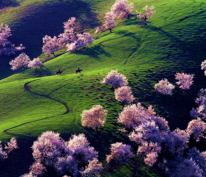 5. Yili Apricot Valley, China