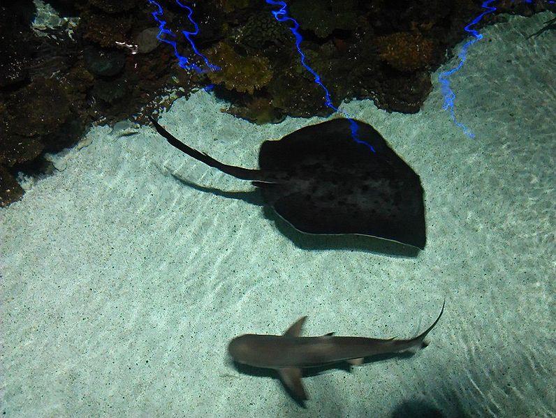 6. National Aquarium