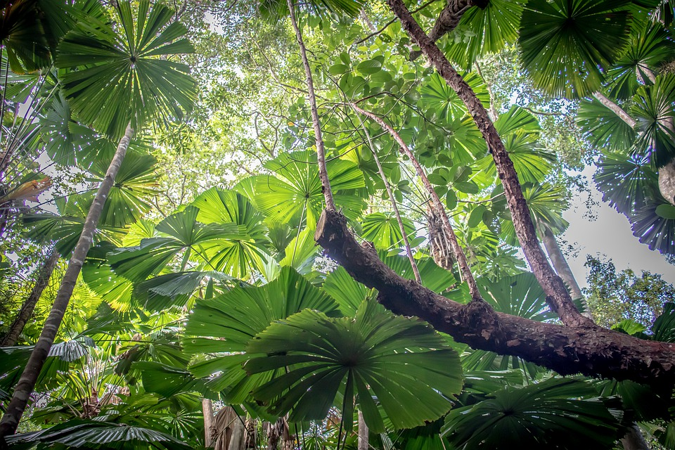 7. Daintree Rainforest