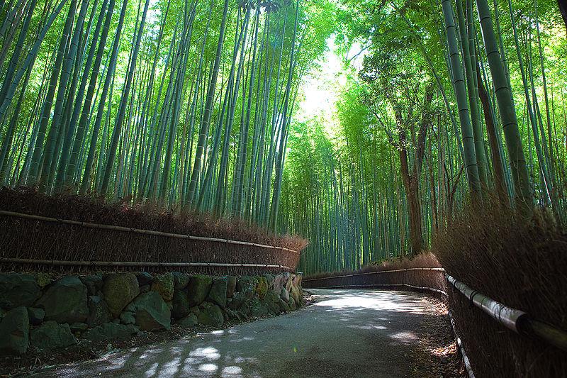 8. Bamboo Forest of Arashimaya Sagano, Japan
