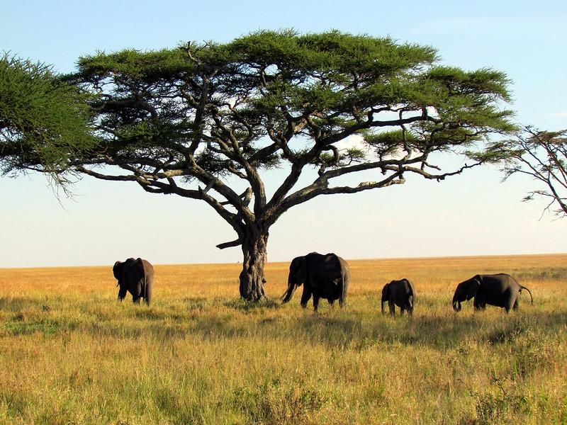 8. Serengeti National Park, Tanzania