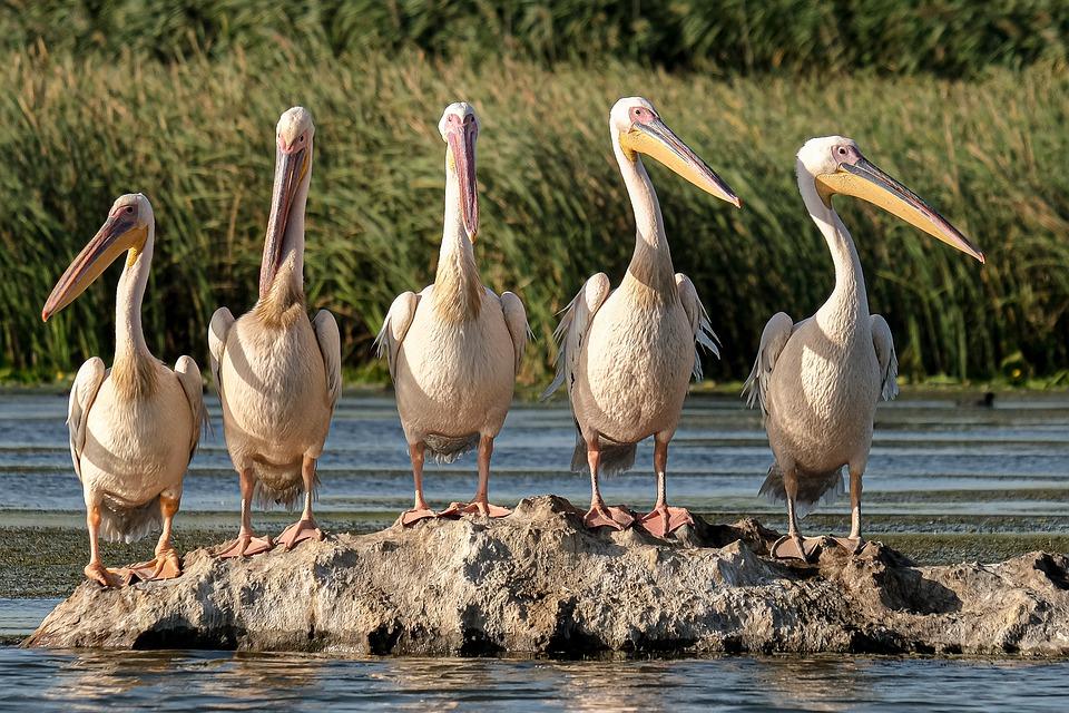 Bao Bolong Wetland Reserve