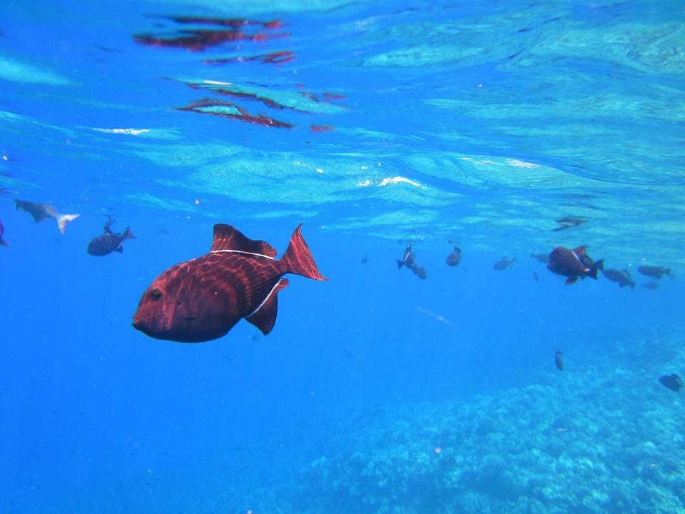 Bismarck Sea, Papua New Guinea