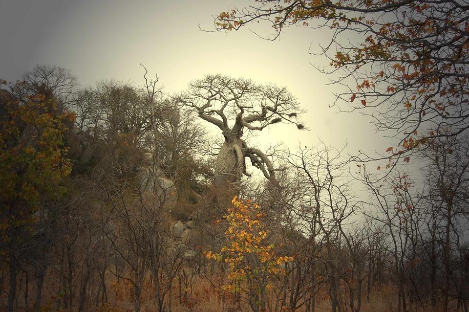 Gishwati Forest National Park