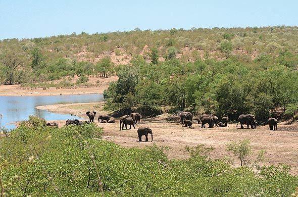 Limpopo National Park