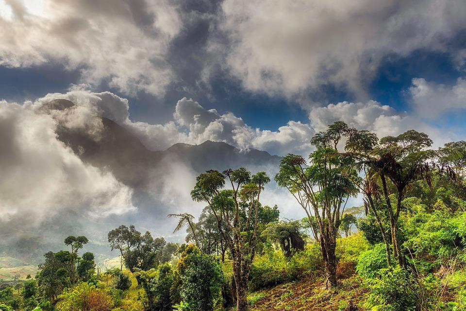 Mukura Natural Forest