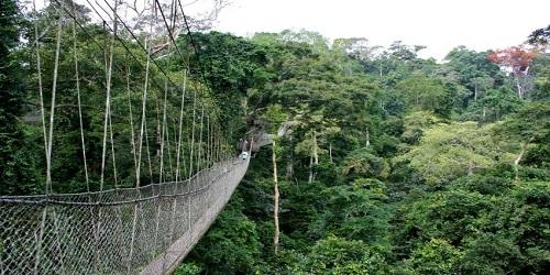 Okomu Forest Reserve