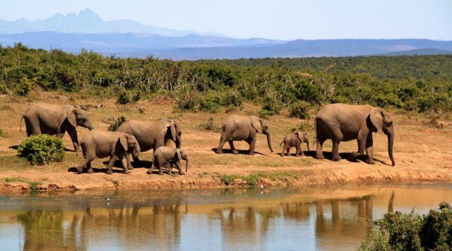 Safari Gambia