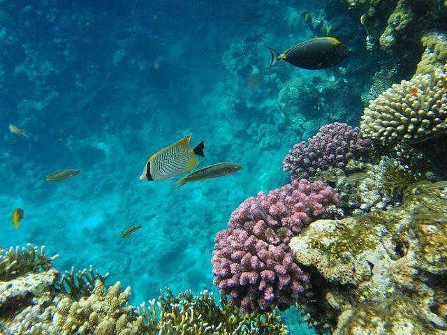 Sharm El-Sheik, Egypt
