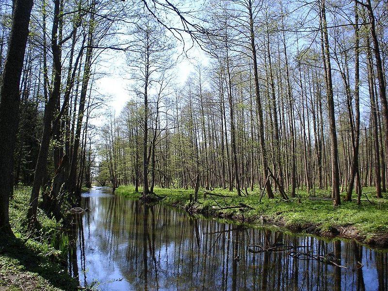 Białowieża Forest, Poland - Belarus