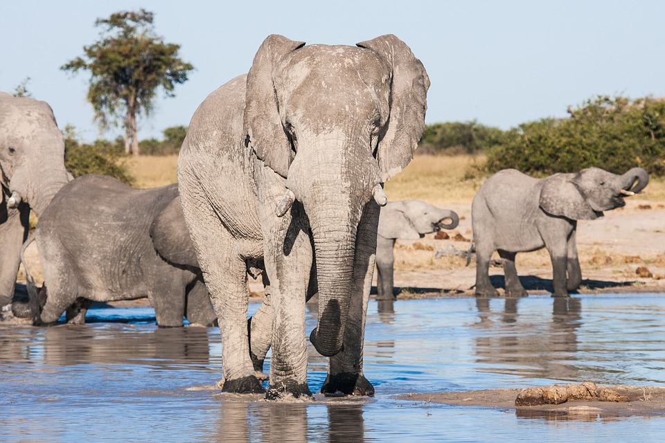 Chobe Park and Okavango Delta