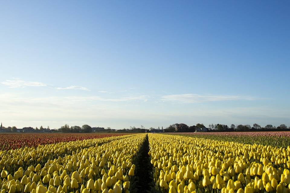 Lisse, the Netherlands