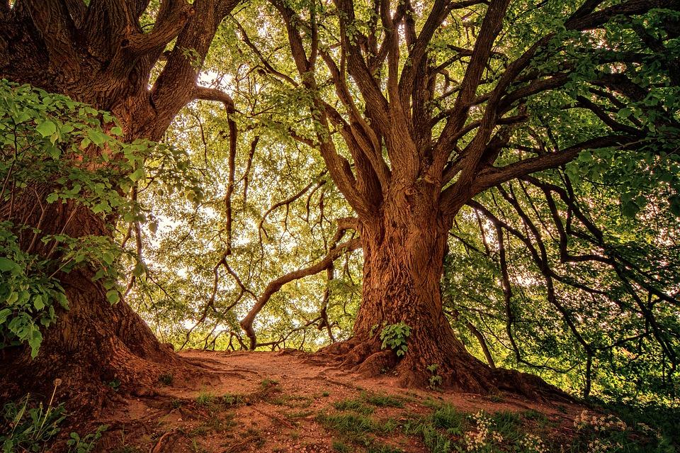 Mercadante Forest, Puglia