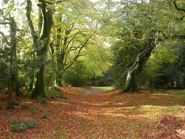 New Forest, UK