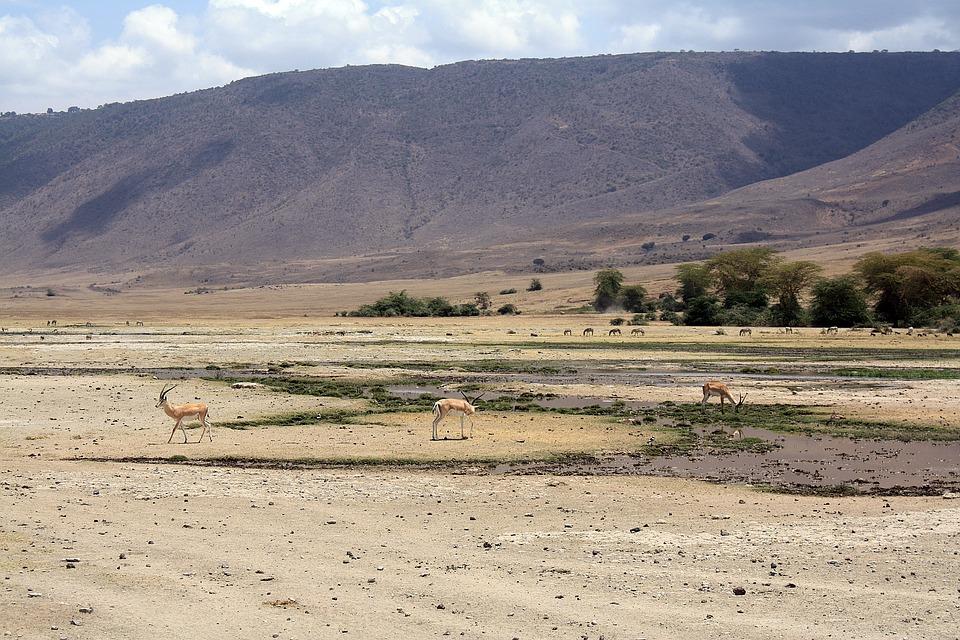 Ngoro Ngoro Crater