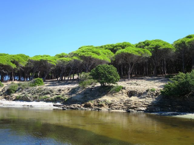 State Forest of Monte Limbara, Sardinia