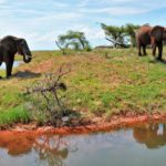 Things to Remember Before Going for a Zimbabwean Safari